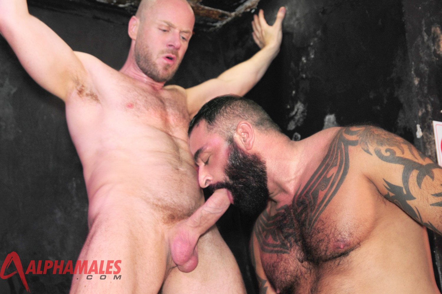 Alphamales Nathan Price and Tom Colt fucking 06 Amateur Tattoo Hairy Muscle Man Fucks a Hot Sex Pig in the Club Toilet